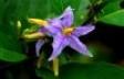 Flor de Importación