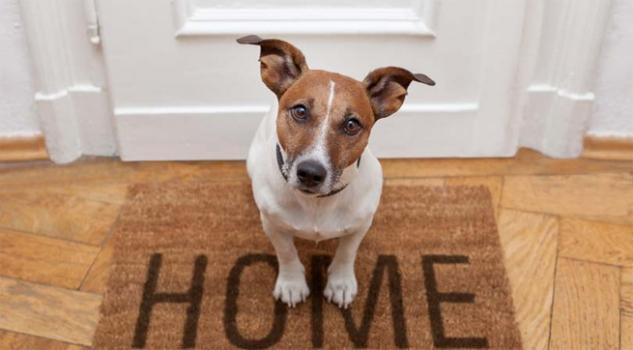 Convivencia con mascotas en la comunidad de propietarios