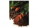 Champu PELO NEGRO Cacao