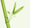 Champú Uso Frecuente Aloe & Bambu