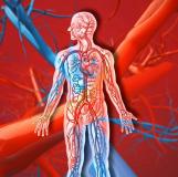Radiología Vascular e Intervencionista