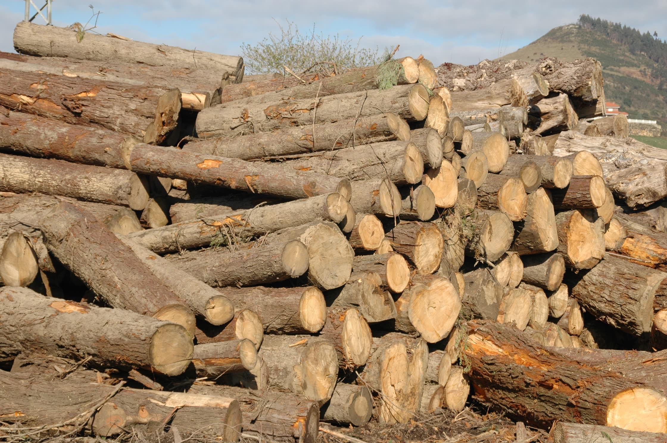 Madera en rollo maderas ingelmo s l fabricaci n de - Transferir fotos a madera ...