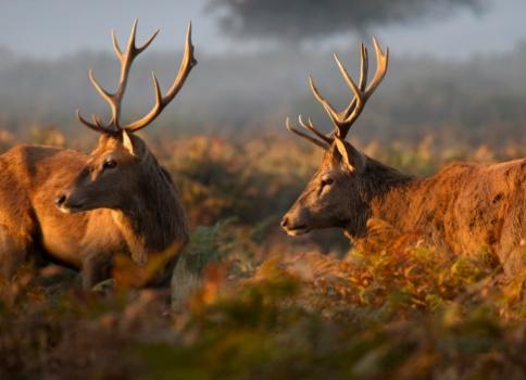La carne de caza