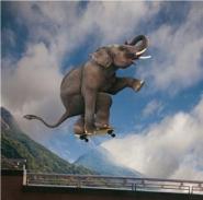 Elephant skateboarding