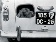 Dog peering from hole in rear of a car
