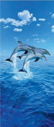 Three dolphin