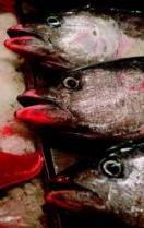 Bruselas prohíbe la pesca del atún rojo en el Mediterráneo.- JULIO 2008