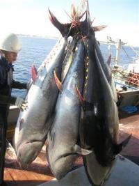 Por el atún rojo