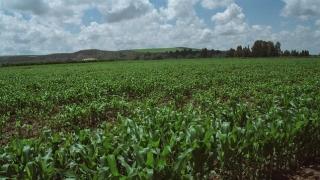 La Agencia Europea de Medio Ambiente recomienda frenar la demanda de biomasa