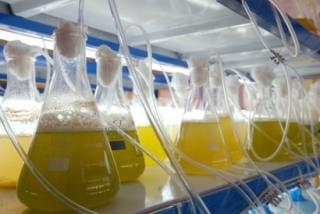 30 de noviembre: fecha clave para los biocarburantes