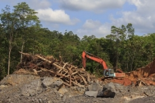 Deforestación para plantaciones de Palma