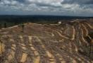Noruega también quiere dar carpetazo al aceite de palma para biodiésel
