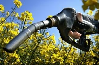 Resumen de la evolución del sector de los biocarburantes durante el año 2017.