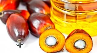 El exceso de producción y las restricciones lesgislativas debilitan el aceite de palma.