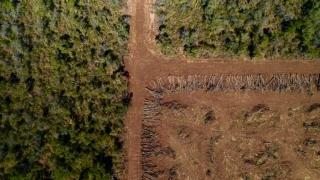 No es necesario esperar a 2023 para acabar con el biodiésel de palma.