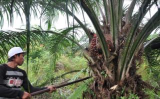 Alemania pone fin al uso de aceite de palma para producir biocombustibles