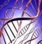 Genetica. Pruebas de Paternidad