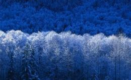 Ferretería para madera – Tornillería
