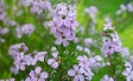 Plantas medicinales y remedios naturales
