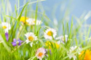 El ginseng aliado para combatir la astenia primaveral