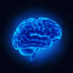 'Lo que es malo para el corazón también es malo para el cerebro'