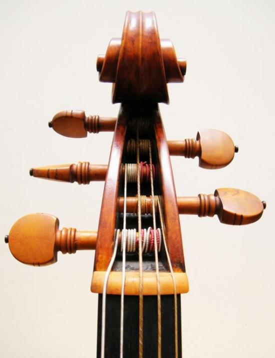 Violone. Voluta front
