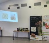 El esparrago verde morado conquista los paladares de la asociación de productores y consumidores de Granada