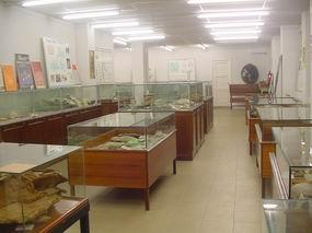 Mañana visita a la Sala de las Tortugas de la USAL