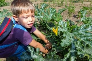 Primera cosecha del Huerto Escolar: ¡¡el esfuerzo da sus frutos!!