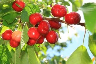 Segundo Ciclo de Infantil  a la cereza