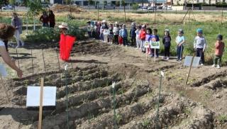 Los Rojos I reciben la lección de hoy en el huerto escolar