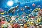 Puzzle 5000 piezas Maravillas del mundo submarino