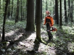 Motosierras forestales