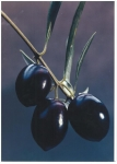 Un componente del aceite de oliva podría aliviar la isquemia y la repersfusión intestinal