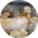 Gestión medioambiental: factor clave en la competitividad de las agroalimentarias