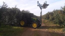 Recortadora de olivos