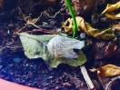 Las mariposas de Las Nieves