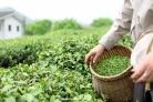 APLICACIONES AGRICOLAS CON AGUA OZONIZADA
