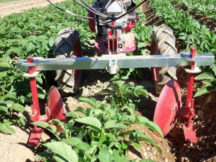 Acaballonamiento patatas