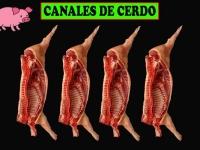 CANAL DE CERDO