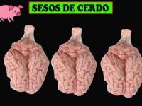 SESOS DE CERDO