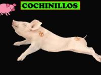 COCHINILLOS