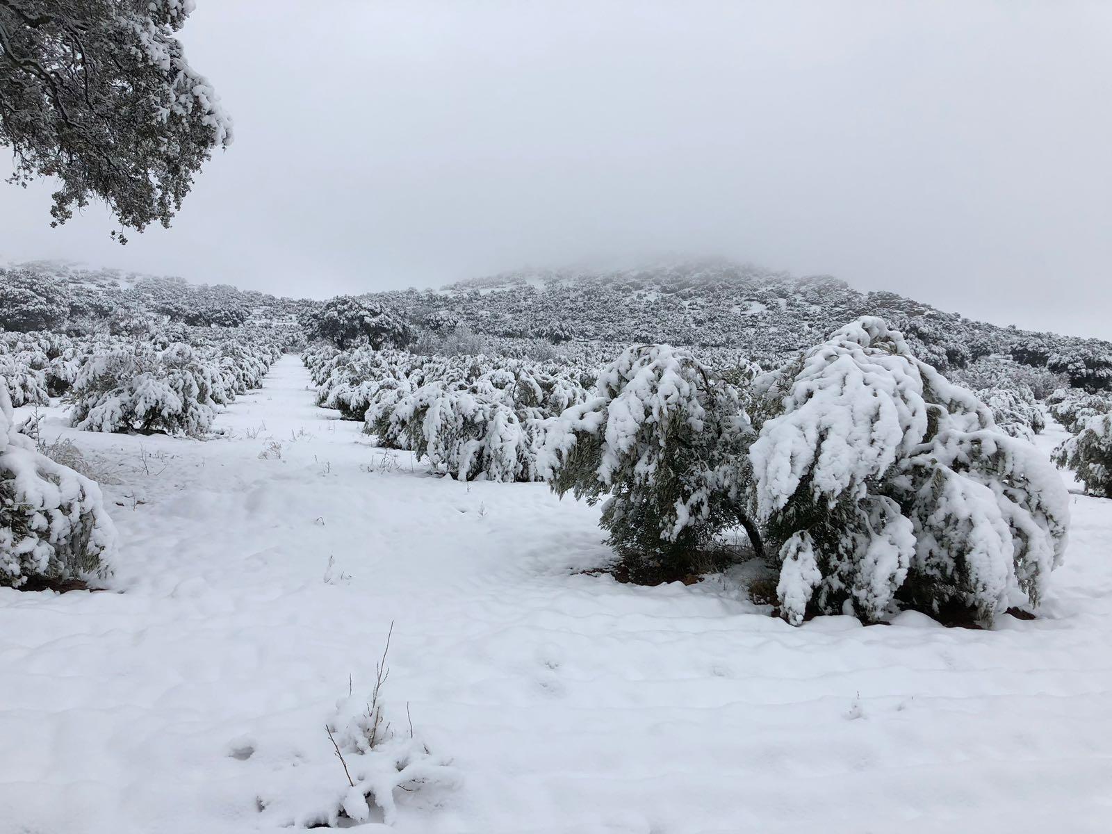 nieve febrero 2018
