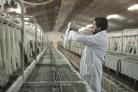 Gama Cunicultura
