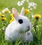 Conejos sacos