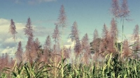 La caña florece, el precio del azúcar sube un 53%