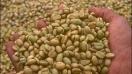 Café verde: Efecto adelgazante