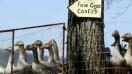 Prohibido el foie gras: Alimento censurado por maltrato animal y causa de obesidad