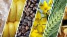 El desafío de la industria: Tendencia hacia lo natural de ingredientes controversiales