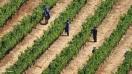 Sector del vino acuerda calculadora de CO2